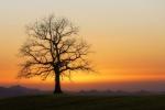 tree-3856808__340.jpg